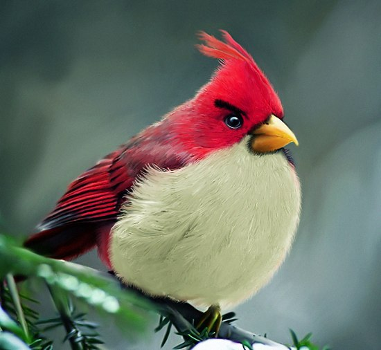 Natural Angry Bird from mohamedraoof on deviantart